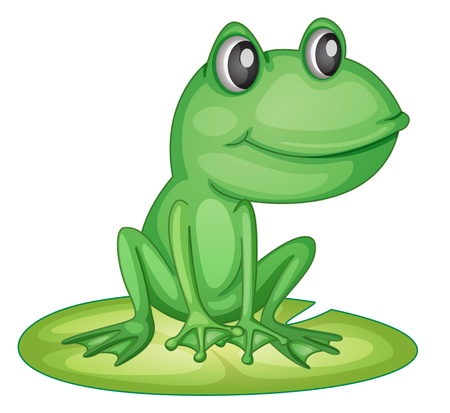 lily pad: Illustration of an isolated green frog Illustration