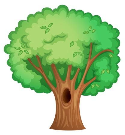 ocas: Ilustración de un árbol aislado con hueco