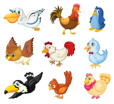 Series of bird illustrations on white Stock Vector - 13376882
