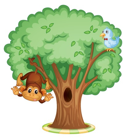 tall tree: Monkey and a bird in a tree