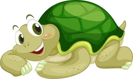 tortuga caricatura: Tortuga animados sobre un fondo blanco Vectores