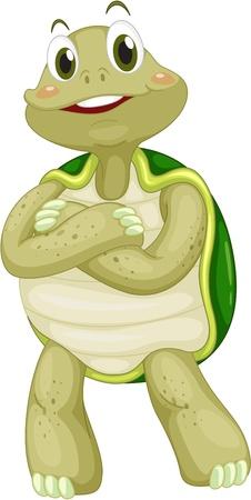 Tortuga animados sobre un fondo blanco Ilustración de vector