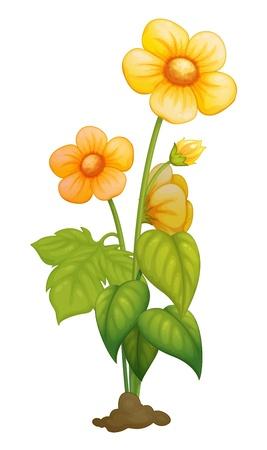 Illustratie van een gedetailleerde bloem