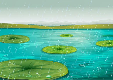 lily pad: Raining on the lily pads Illustration