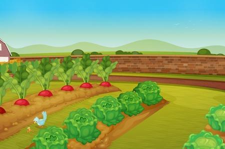 cabbage: illustratie van een vegie patch Stock Illustratie