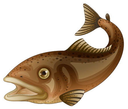 a freshwater fish: Detailed fish illustration on white