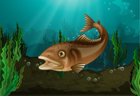 seetang: S��wasserfische in Unterwasser-Habitat