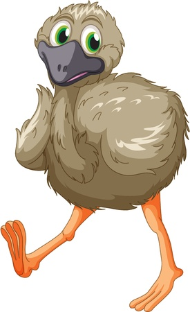 emu: Caricatura de un emu en blanco Vectores