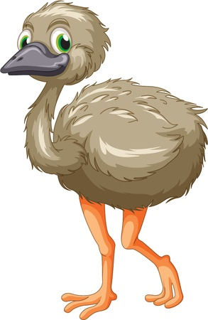 emu: Cartoon of an emu on white Illustration