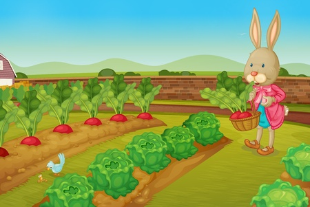 Bunny picking raddishes in the farm Vector