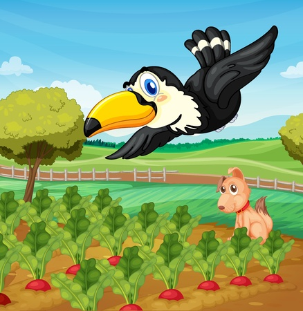 Toucan and a dog in a farm
