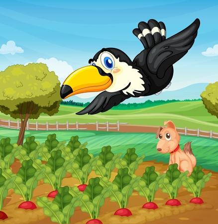 Toucan and a dog in a farm Stock Vector - 13493979