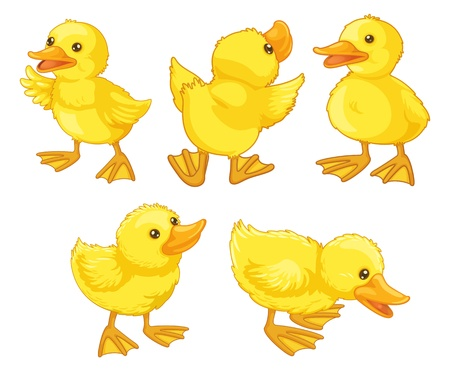 Illustraiton of duckling chicks on white Vector