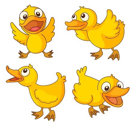 agachado: Illustraiton de los polluelos en blanco