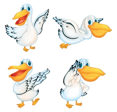 illustraiton: Illustraiton de pel�canos en blanco Vectores