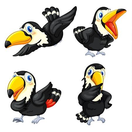 toucan: Illustraiton of toucan birds on white Illustration