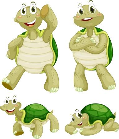 tortuga caricatura: Illustraiton de las tortugas cómicas en blanco