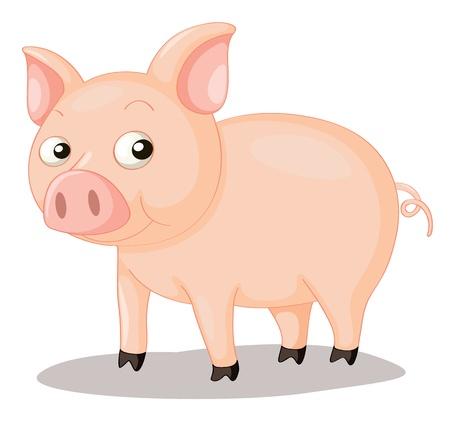 cerdos: Ilustraci�n de un cerdo lindo en blanco