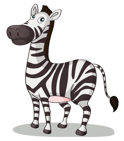 Illustration of a zebra on white Vector