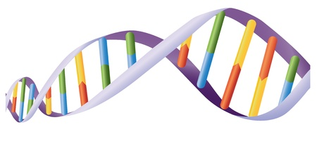 genetica: Illustrazione di elica del DNA su bianco Vettoriali