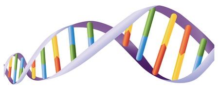 Ilustración de la hélice de ADN en el blanco