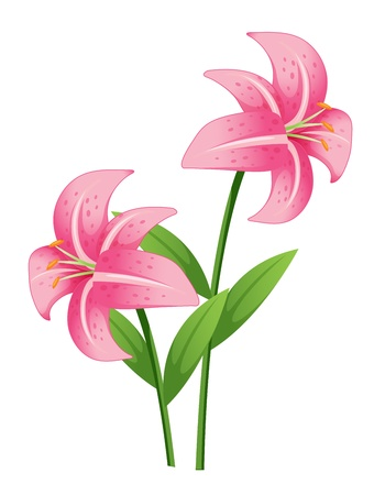 pink orchid: Illustration of a pink orchid