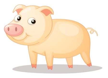 Illustration of a cute piggy Vector