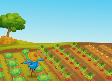 vegatables: Illustration of a scarecrow in a vegetable patch