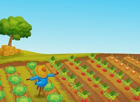 zanahoria caricatura: Ilustración de un espantapájaros en un huerto