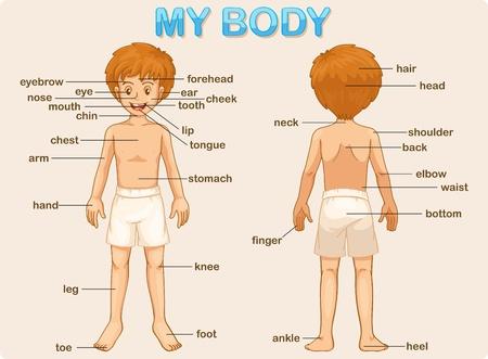 leccion: Ilustración cartel de las partes del cuerpo