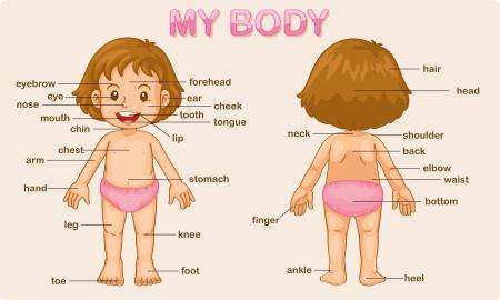 Ilustración cartel de las partes del cuerpo