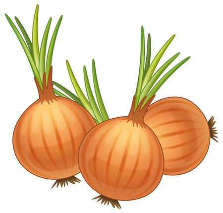 onion isolated: illustration of some brown onions