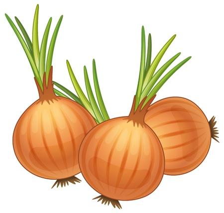 illustrazione di alcune cipolle marroni Vettoriali