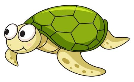 tortuga caricatura: Ilustración de una tortuga aislada