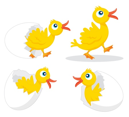 Illustration of four chicks hatching Vector