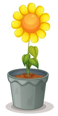 plant pot: Illustration of sunflower on white