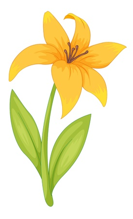 anther: Illustration of a simple flower
