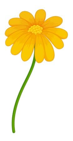 pleasent: Illustration of a yellow flower Illustration