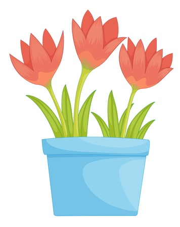 simple flower: Illustration of a pot of flowers
