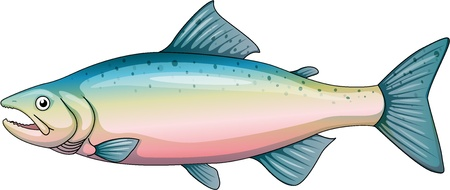 Illustratie van een regenboogforel Vector Illustratie