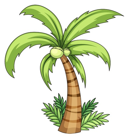Illustration of isolated palm on white Stock Vector - 13667397