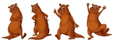 nutria caricatura: Ilustraci�n de un conjunto de nutrias marrones