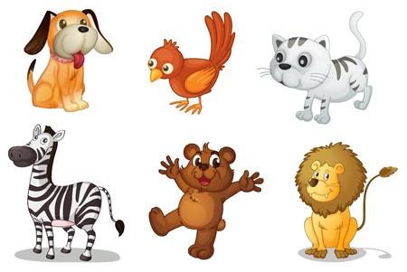 pajaro caricatura: Ilustración de un conjunto de animales divertidos