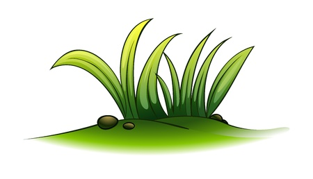 grass blades: Illustration of a plant element