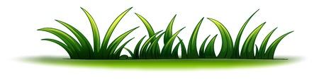 illustration herbe: Illustration d'un �l�ment v�g�tal