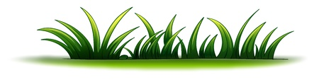 toppa: Illustrazione di un elemento vegetale