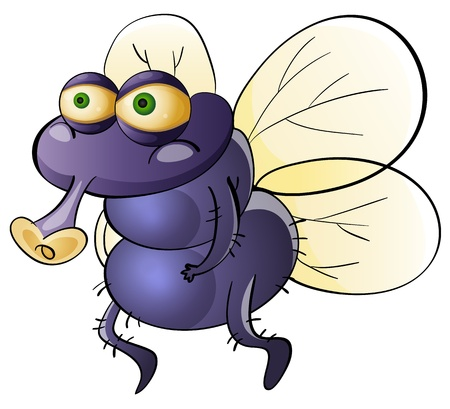 Illustration of a dirty housefly Vector
