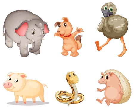 Illustration of collection of animals Stock Vector - 13749364