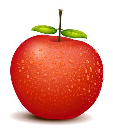 fleshy: Illlustration of a fresh red apple