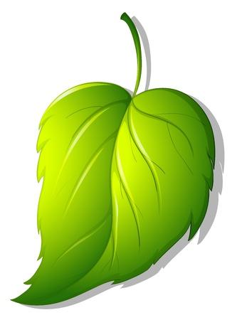 Ilustración de una hoja verde